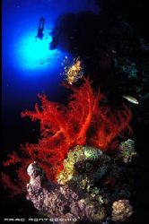 Bells to Blue Hole, Soft corals, Lion fish and divers. by Marc Montocchio 